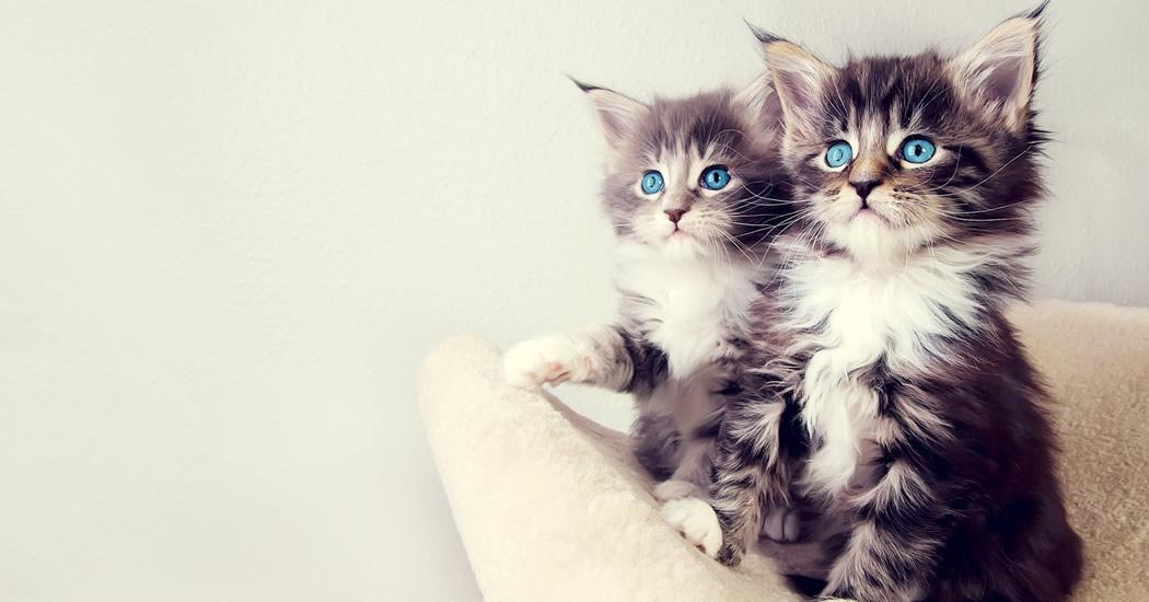 Imágenes con gatitos para compartir.