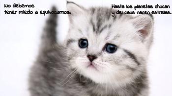 Frases célebres en postales con gatitos.