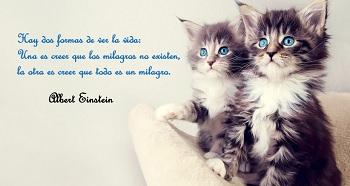 Imágenes con gatitos lindas.