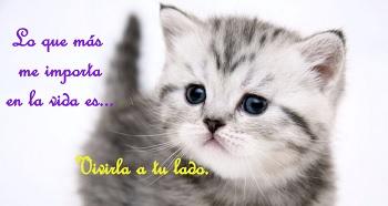 Dedicatorias de amor en postales con gatitos.