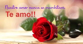 Imágenes flores para hacer postales románticas gratis.